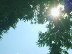 Summer Post 2