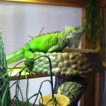 rocie - healthy habitat - jealous jade 450px
