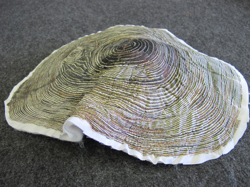 partially shaped tree ring
