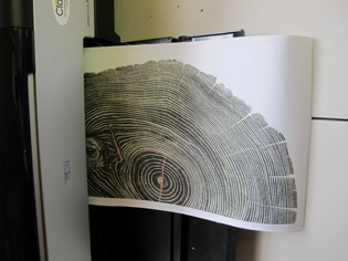 printed half of tree ring