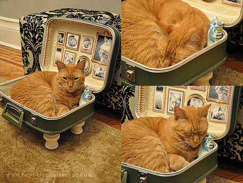 How to make a suitcase pet bed