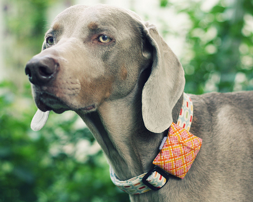 DIY dog collar pouch
