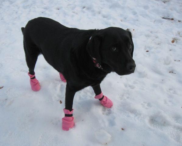 DIY doggie booties