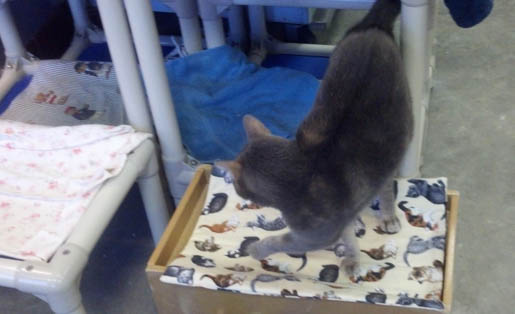 Help a Cat in Need with a Kennel Quilt image 9