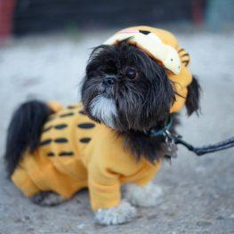 Pet Costume Alterations Garfield