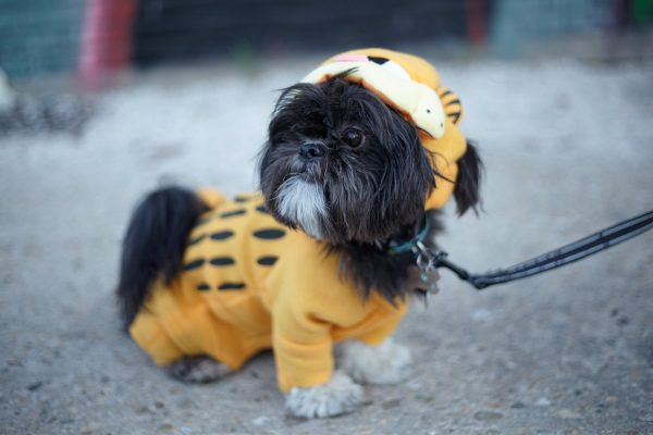 Pet Costume Alterations Garfield