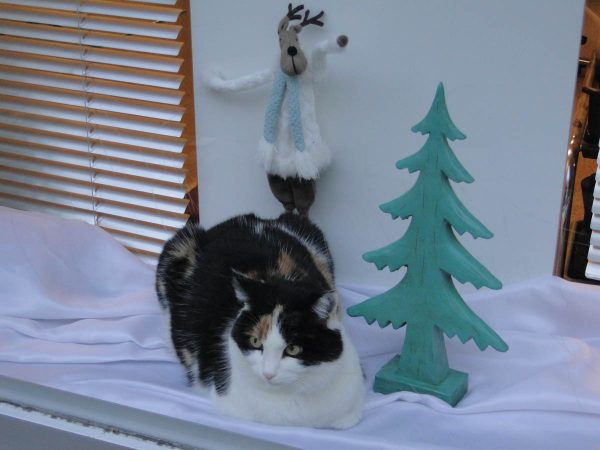 Christmas Season in Steckborn Switzerland - cat