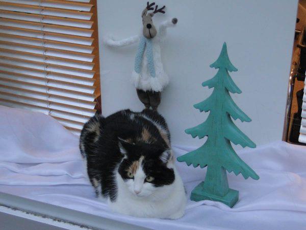 Christmas Season in Steckborn Switzerland - cat