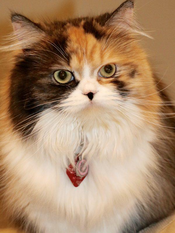 Photo of Pet