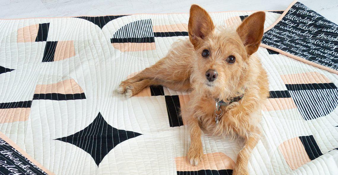 Sew to Serve Animal Rescue