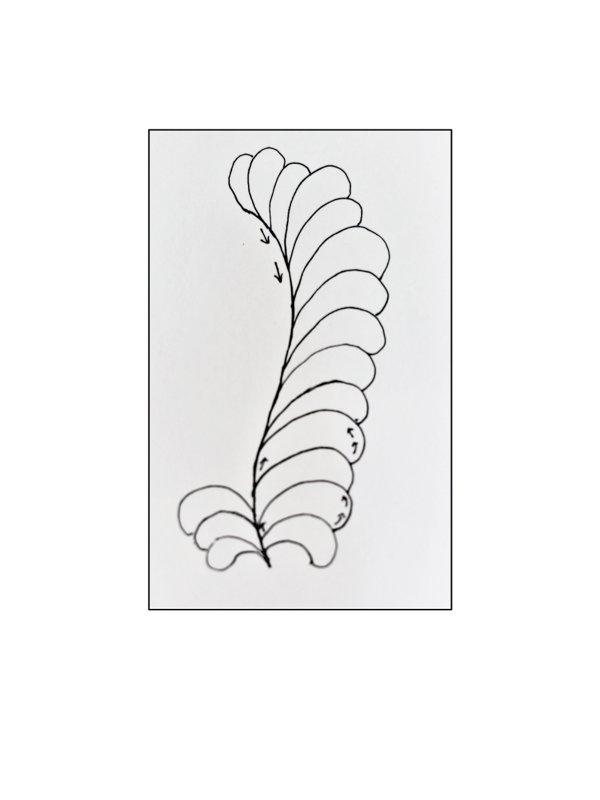 Free-Motion_Quilting_Feathers_Drawn_feather